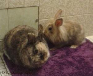 kaninchen-zuhause